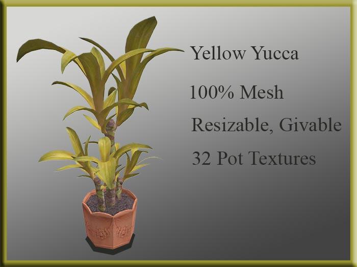 !MM! Yucca Yellow