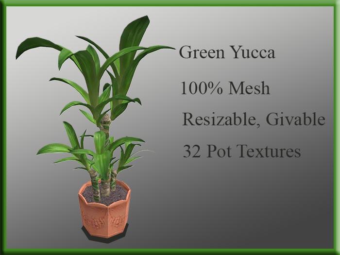!MM! Yucca Green