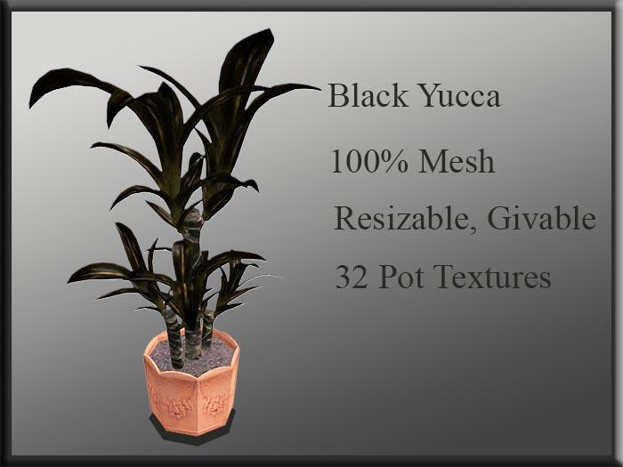 !MM! Yucca Black