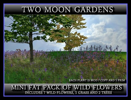 MINI FAT PACK OF WILD FLOWERS - Two Moon Gardens