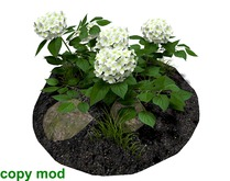 Hydrangea Bush White with Soil and Rocks