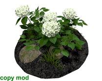 Hydrangea Bush White with Soil and Rocks