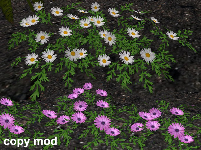 Daisies Pack - Copy Mod