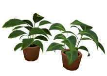 Potted Leafy Plants - Mesh - Full Perm