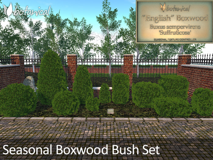 Botanical - Seasonal Boxwood Bushes Set