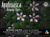 Ayahuasca Jungle Vine - Mesh + Materials