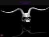! [NW] Skull Headpice white