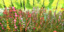 *Shabby* Autumn Wildflowers