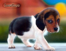 BB Biobreeds Cute Beagle unbirthed for your Home
