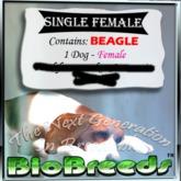 BB Beagle Box female