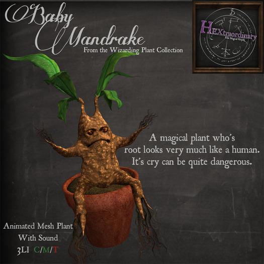 *HEXtraordinary* : Cranky Baby Mandrake