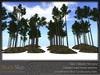 Skye scots pine 7