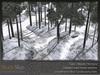 Skye scots pine 12
