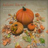 "[CIRCA] - ""Autumn Harvest"" - Fall Pumpkins - Decor 3"