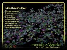 Calico Groundcovers
