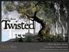 Skye twisted tree 1