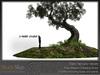 Skye twisted tree 9