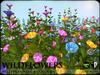 FLOWERS - Wild Flowers - Petunias