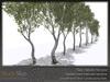 Skye birch grove 4