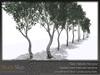 Skye birch grove 5