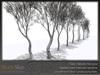Skye birch grove 7