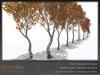 Skye birch grove 6