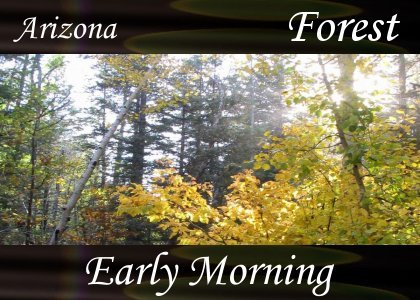 Atmo-AZ-Forest - Early Morning 2:00