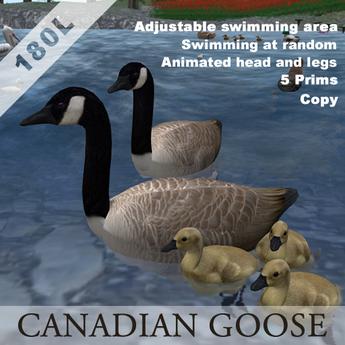 canadian goose_box
