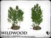 Truchet  silver birch and aubretia   ref1