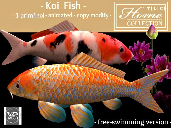 Koi, fish, set of 2, free-swimming