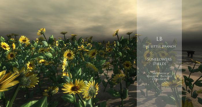 LB sunflowers field 100% Mesh