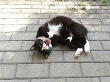 Dorky Cat Talk Sounds for TWI Mesh Lion BOXED