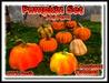 Pumpkin Set 100% Mesh Full Perm (Boxed)