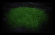 Alicias Forest2 sculpt grass