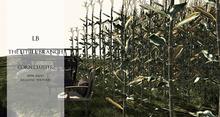 Mesh Realistic Corn Cluster New!