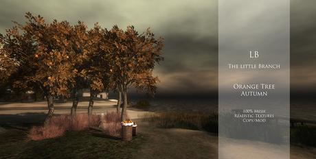 LB_OrangeTree{Autumn}