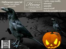 Crow, pumpkin, Halloween