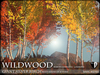 TREES - Wildwood - Giant Silver Birch - SEASON CHANGING - C/M