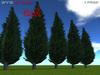 Pinetrees2