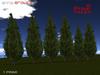 Pinetrees6