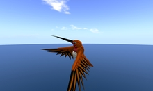 Rufous Hummingbird Avatar