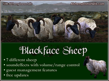 Blackface Sheep (WAS $325 -> NOW ONLY $85!)