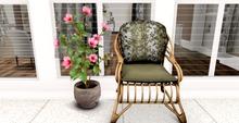 CHOBANII:: Hibiscus Plant :: pink