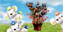 CHOBANII::House hold plant 1 FREE GIFT :)