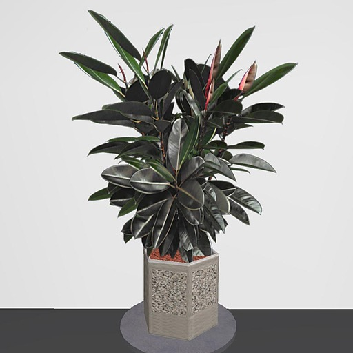 Rubber Potted Plant