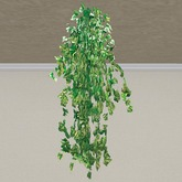 Ivory Tendril Hanging Basket Plant (1 prim only!)
