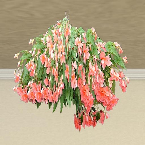 Hanging Basket 4 (only 1 prim!)