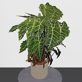 Alocasia Potted Plant (2 Prims only!)