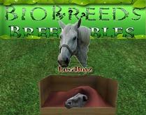 BB BioBreeds Chesnut - Long - Long Cheyenne unbirthed for Everyone