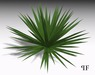 Plant 003 - Yucca ground